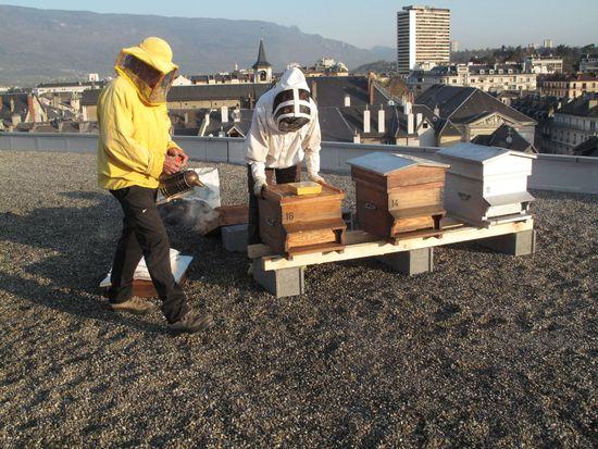 le miel des abeilles install es sur les toits de la ville r compens. Black Bedroom Furniture Sets. Home Design Ideas