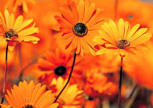 fleuriste aix les bains compositions florales bouquets de fleurs aix les bains. Black Bedroom Furniture Sets. Home Design Ideas