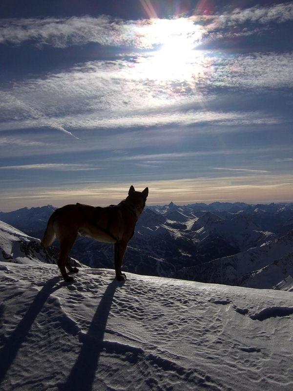 Photos Savoie - chien en montagne au sommet du val Fréjus par Emmanuel Fiandino